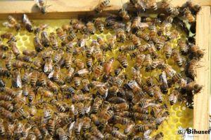 Bifamilie på 6 rammer, inkl pant