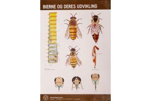 Plakat - Fra blomst til honning