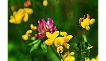 Bi- og insektblanding